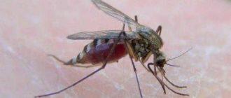 Как спасти ребенка от комаров